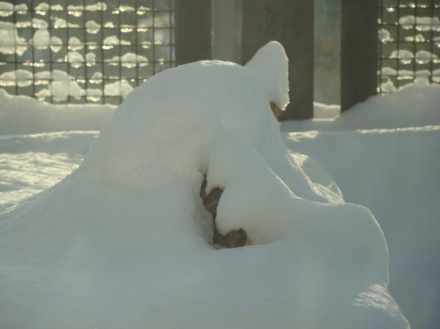 A kale snow cone